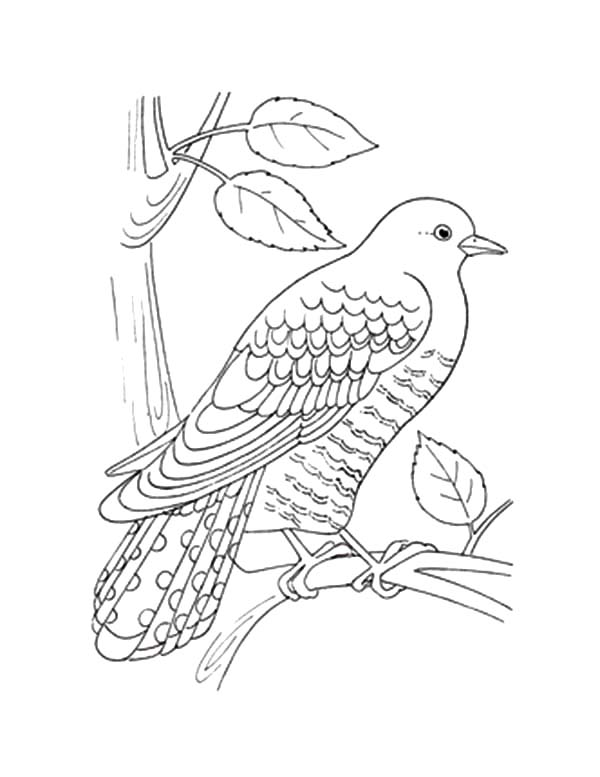 Cuckoo Bird Is Taking A Rest Coloring Pages