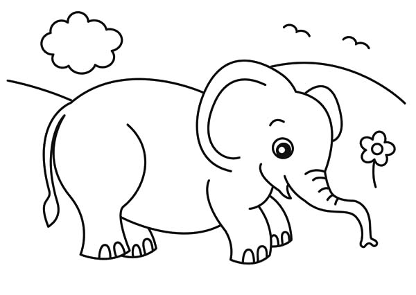 Cute Big Eyed Baby African Elephant Coloring Pages | Coloring Sky
