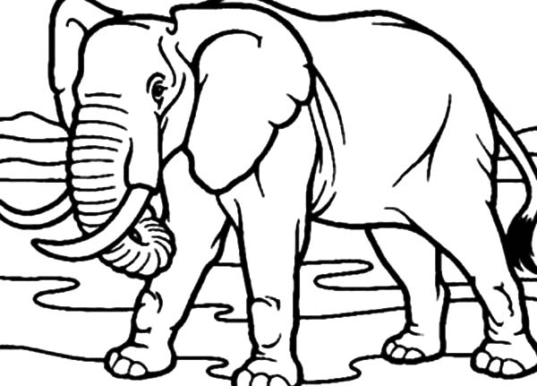 Drawing African Elephant Coloring Pages | Coloring Sky
