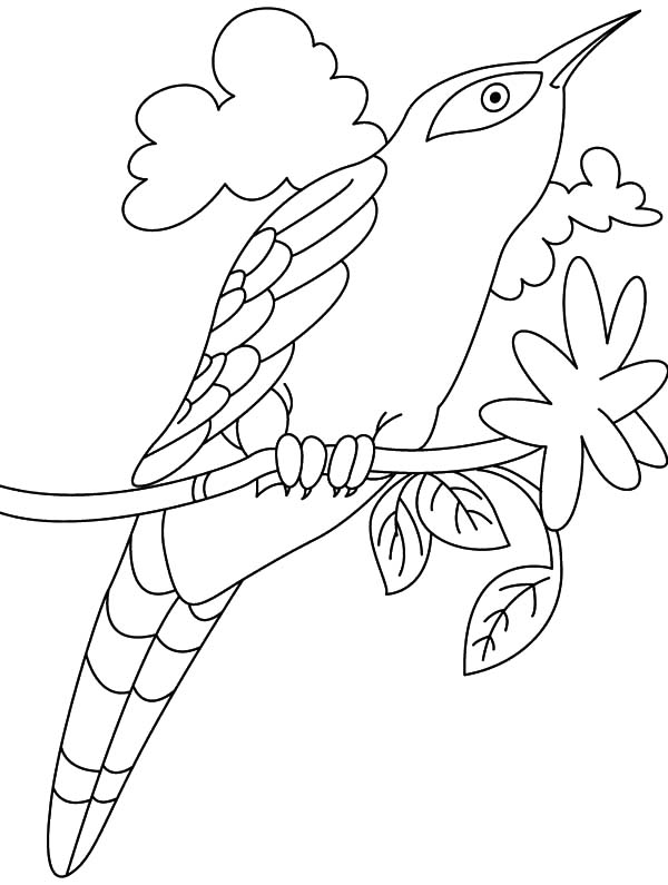 Drawing Cuckoo Bird Coloring Pages