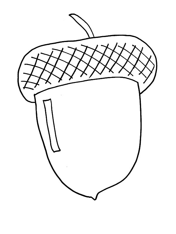 drawng acorn coloring pages