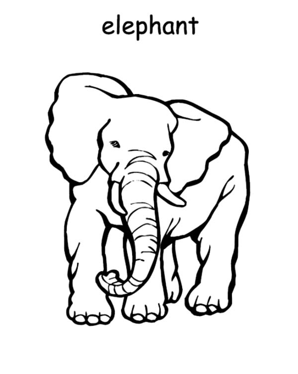 e elephant coloring pages - photo#18