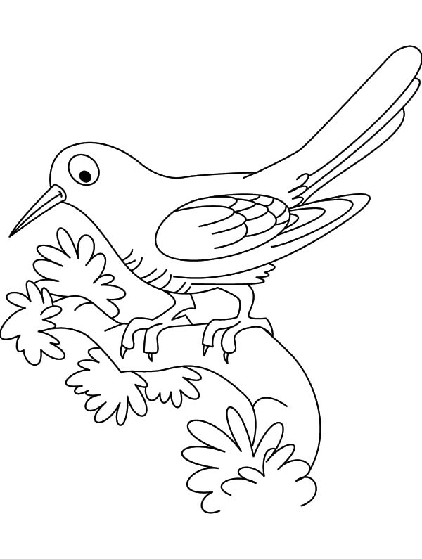 Cuckoo Bird Outline Coloring Pages