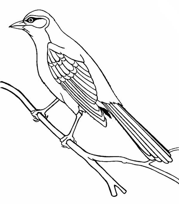 Guira Cuckoo Bird Coloring Pages