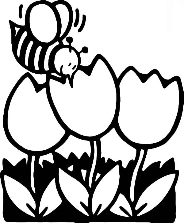 honey bee in tulips garden coloring pages