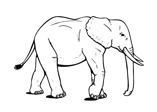 How to Draw African Elephant Coloring Pages | Coloring Sky