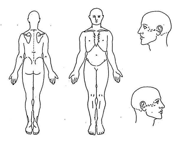 human body head anatomy coloring pages