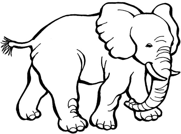 Sketch Of African Elephant Coloring Pages Sketch Of
