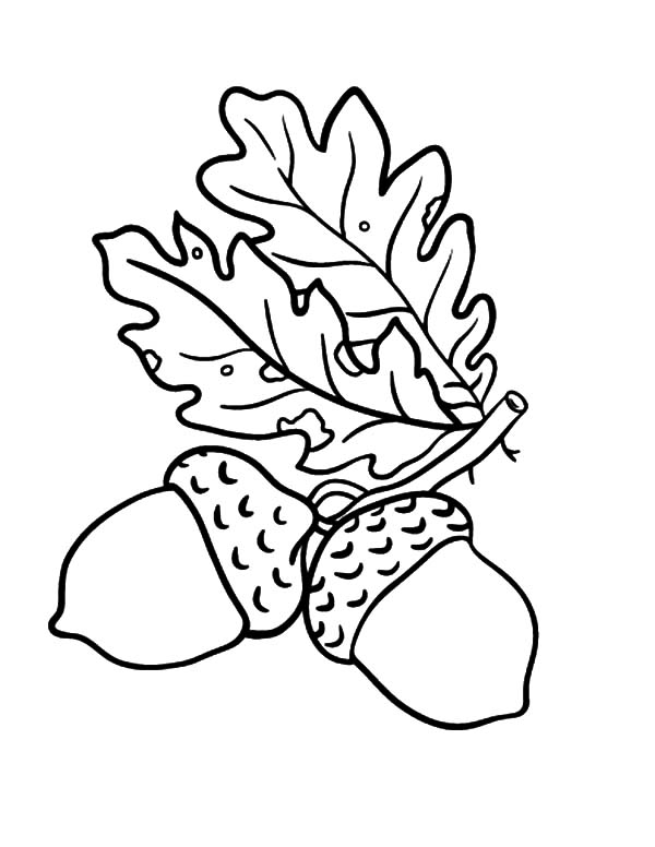 Oak Leaves Acorn Coloring Pages | Coloring Sky