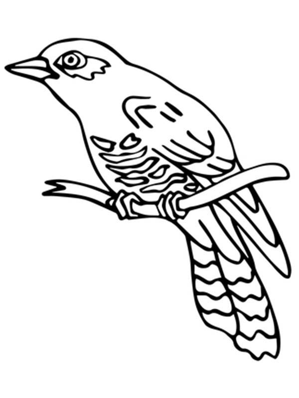 Perched Common Cuckoo Bird Coloring Pages