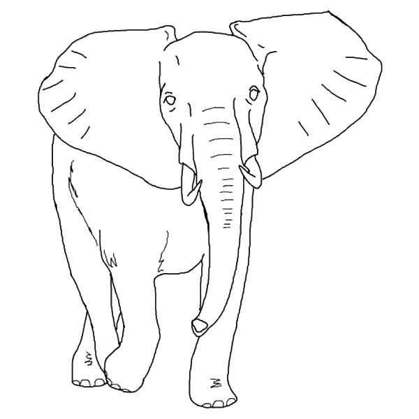 How To Draw African Elephant Coloring Pages Coloring Sky