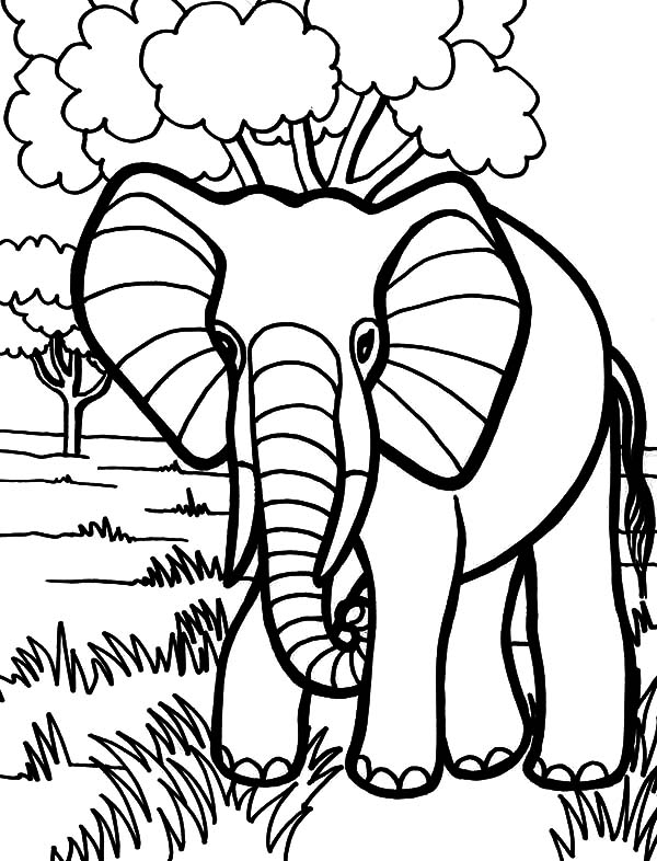 Wild African Elephant Coloring Pages