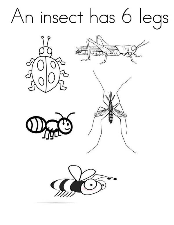 An Insect has Six Legs Coloring Page Coloring Sky