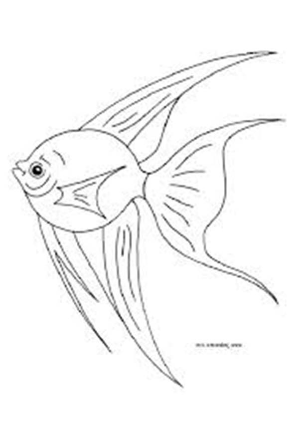 Angel Fish Coloring Page For Kids : Coloring Sky