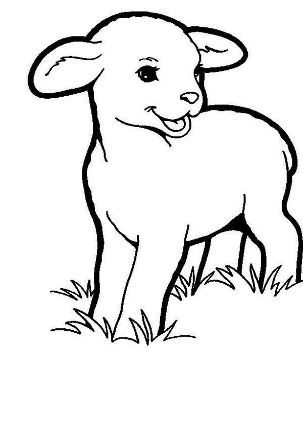 Baby Lamb Eating Grass Coloring