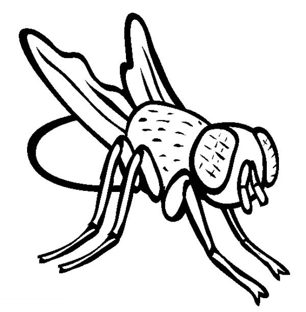 funny fly insects coloring pages - photo#27