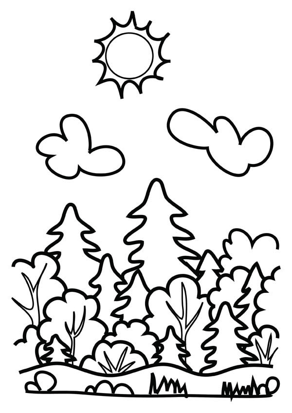 Forest, : Drawing Forest Coloring Page