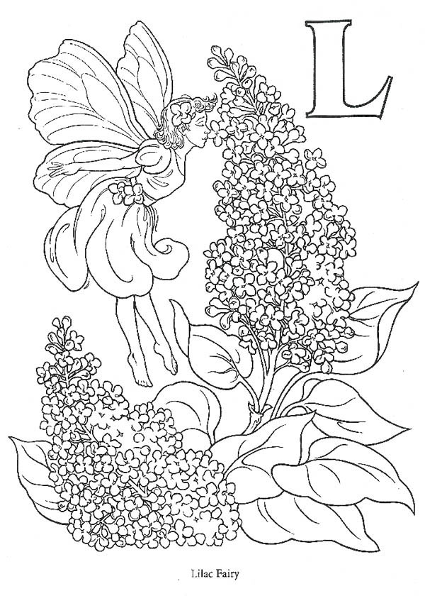 Fairy Love The Smell Of Lilac Flower Coloring Page