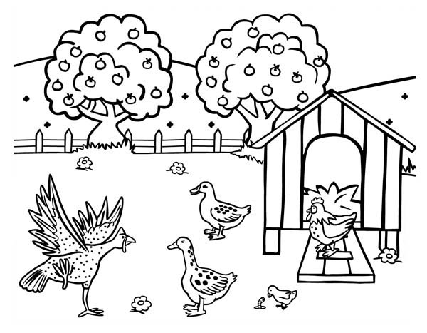 farm animal coloring pages chicken - photo#11