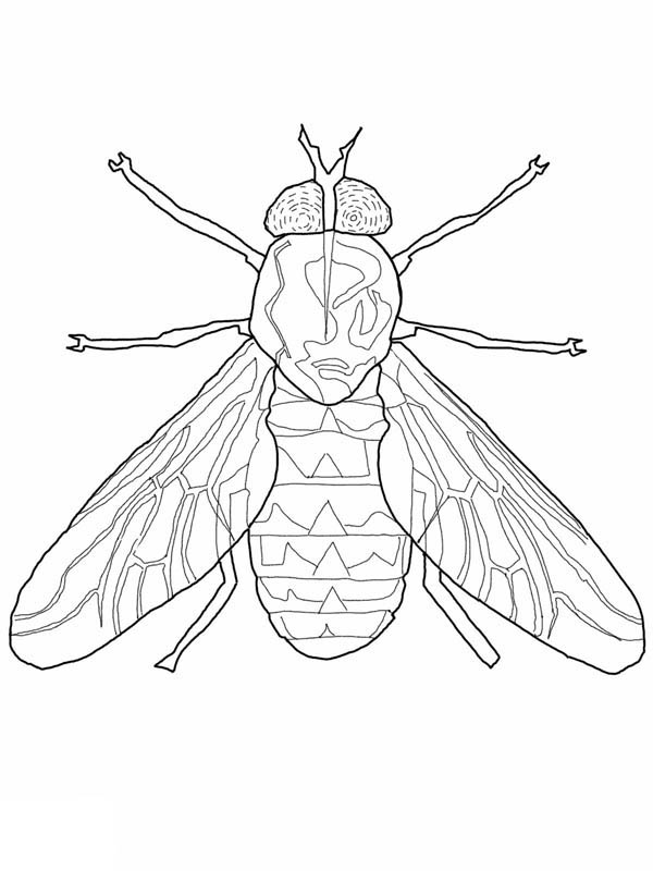 Fly, : Fly Coloring Page for Kids