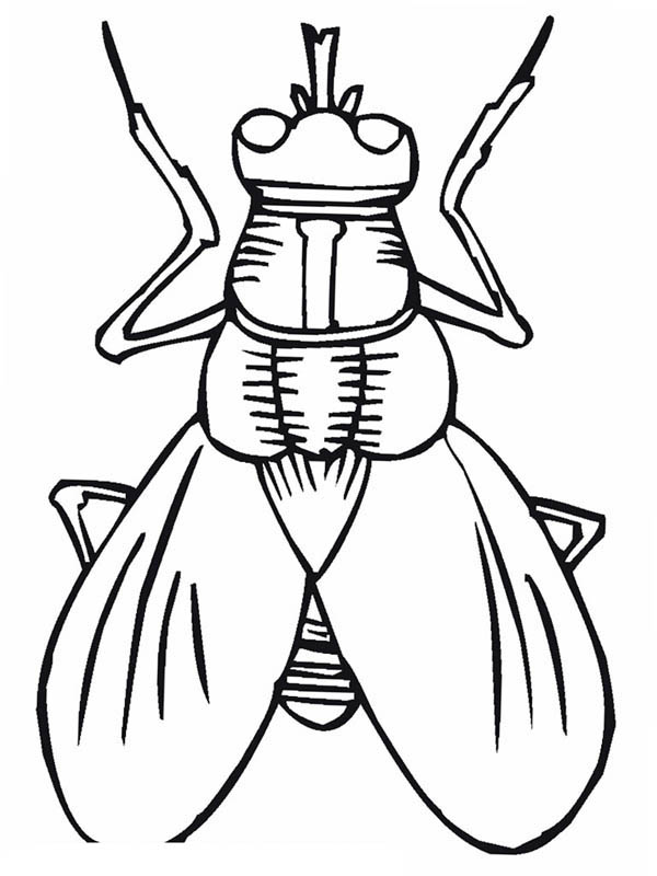 Fly Coloring Page Coloring Sky