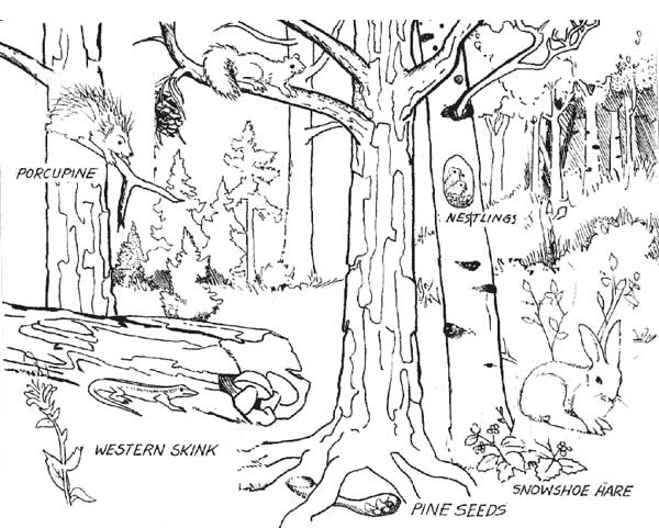 Forest Where Animals Live Coloring