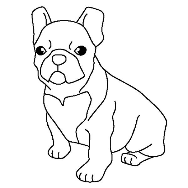 French Bulldog Coloring Page : Coloring Sky