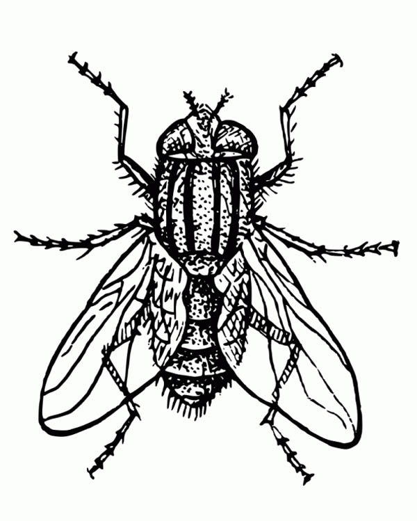 Hairy Fly Coloring Page Coloring Sky