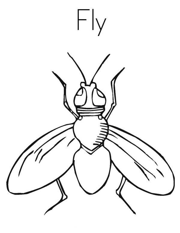 House Fly Coloring Page Coloring Sky