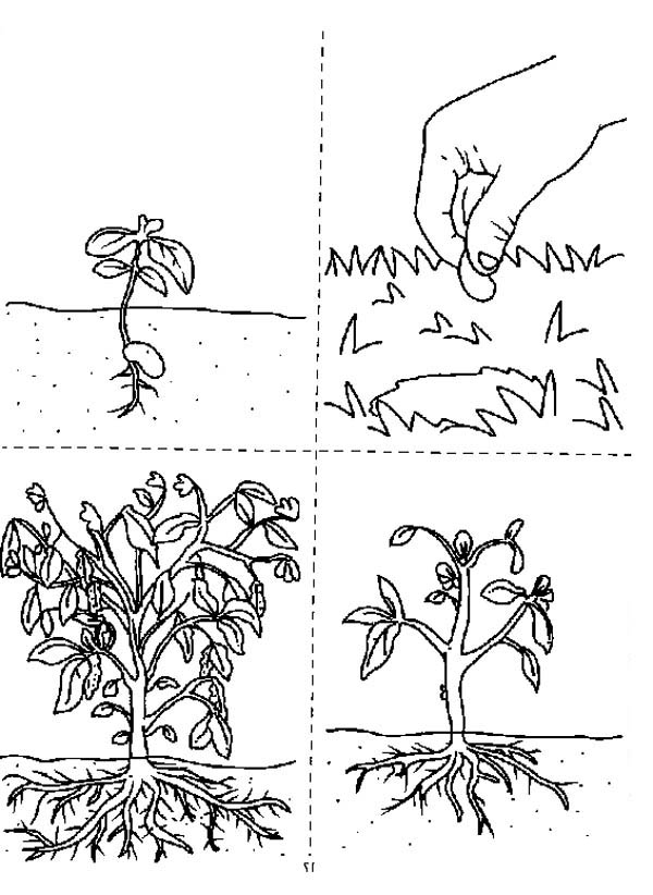 How Does A Growing Plants Coloring