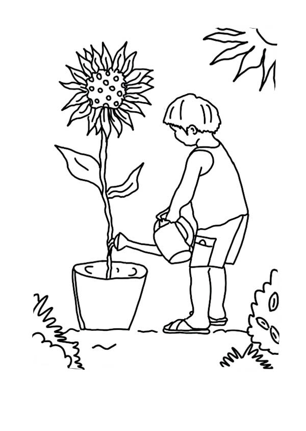 kid growing plants sunflower coloring page