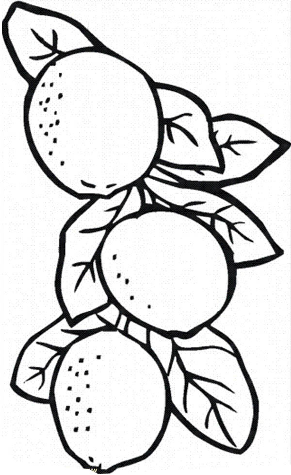 It's just a graphic of Witty Lemon Coloring Page
