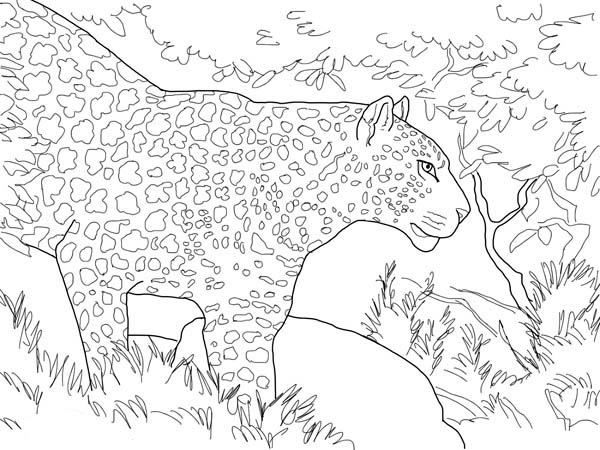 Forest, : Leopard Entering Forest Coloring Page