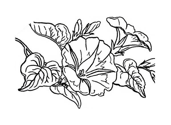 coloring pages of lavender - photo#36