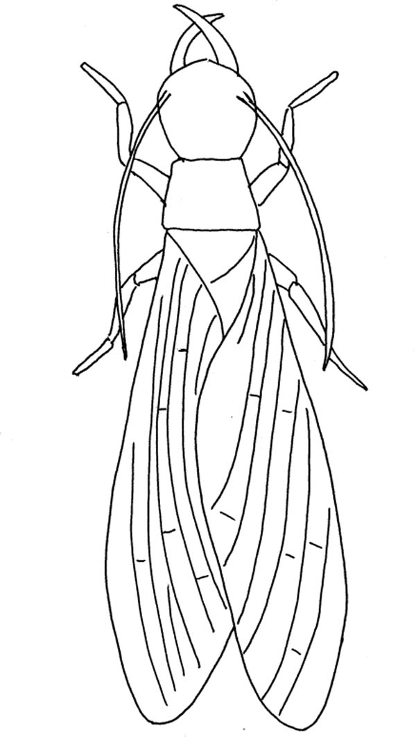 Long Winged Fly Coloring Page : Coloring Sky