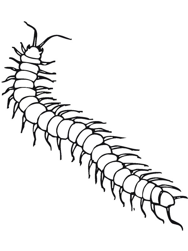 Poisonous Centipede Insect Coloring Page Coloring Sky