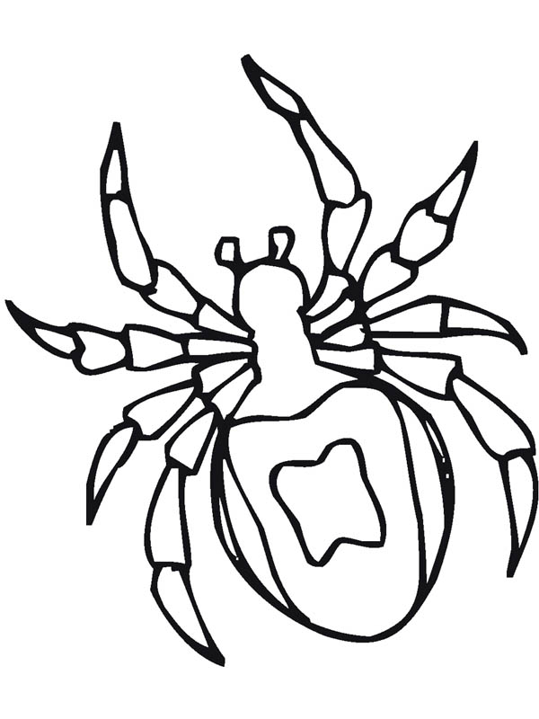 Insect, : Spider Insect Coloring Page