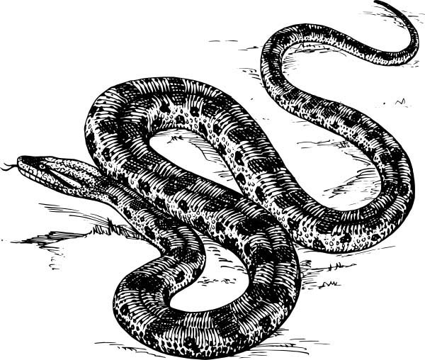 Stay Away From Anaconda Coloring Page Coloring Sky