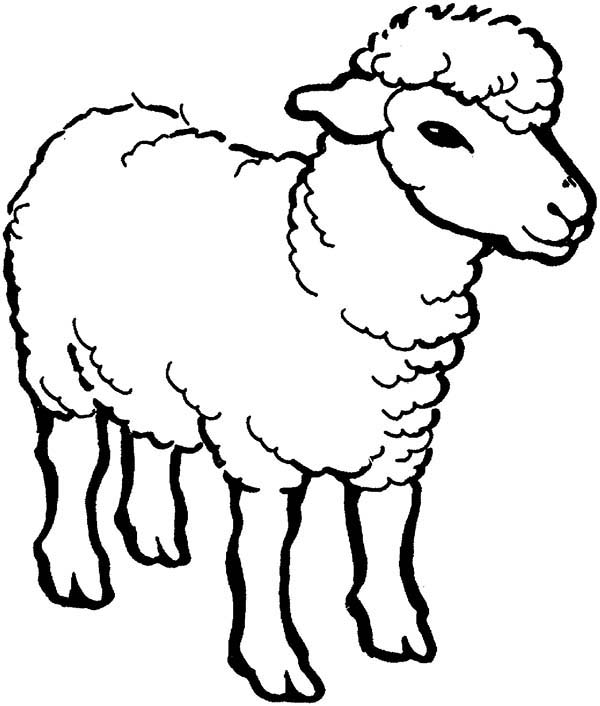 Sheep, : Alpha Male Sheep Coloring Page