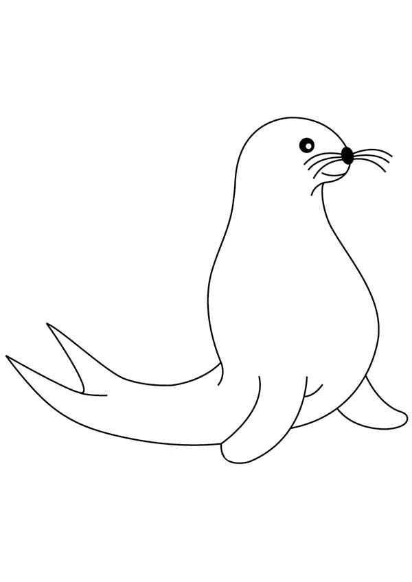 Seal, : Artic Animal Seal Coloring Page