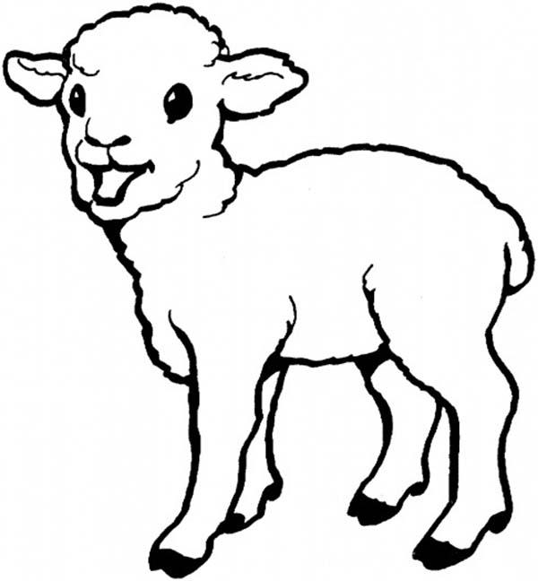 Sheep, : Baby Born Sheep Coloring Page