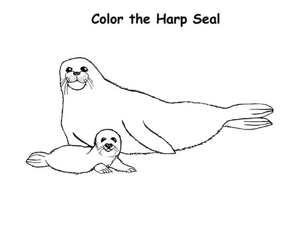 Seal, : Baby Harp Seal and His Mother Coloring Page