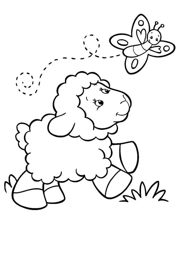 Sheep, : Baby Sheep Following a Butterfly Coloring Page