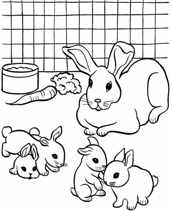 Pet, : Breeding Pet Rabbit Coloring Page