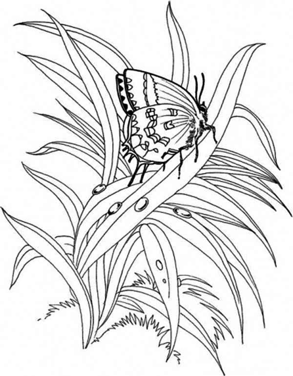 Plants, : Butterfly Plants Coloring Page