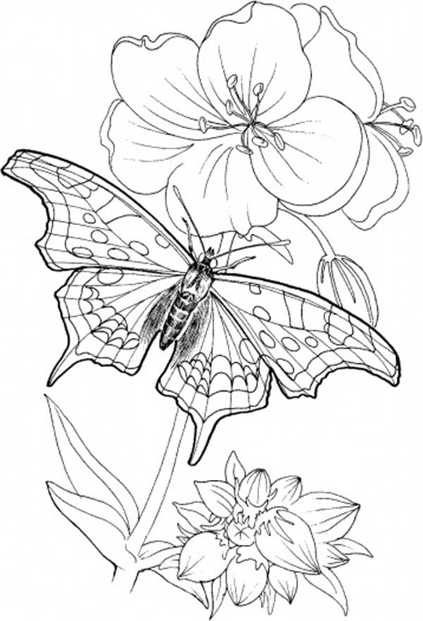 Butterfly Standing on Blooming Plants Coloring Page