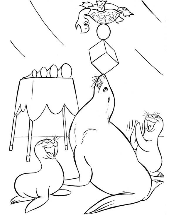 Seal, : Circus Seal Showtime with Turtle Coloring Page