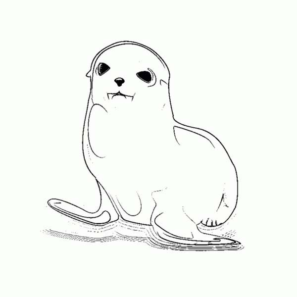 Seal, : Cute Baby Seal Coloring Page