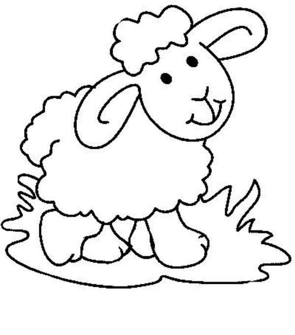 Sheep, : Cute Baby Sheep Coloring Page