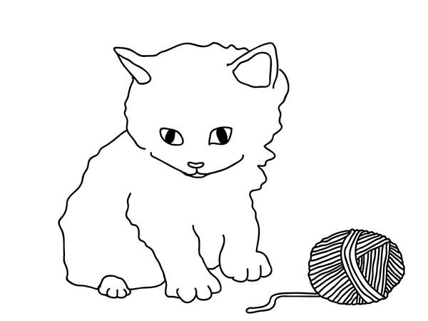 Pet, : Cute Pet Cat Coloring Page